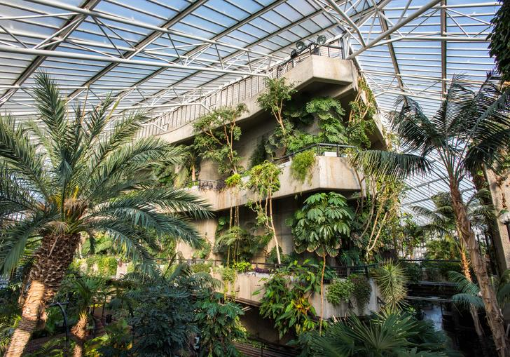 An image of the Barbican Conservatory