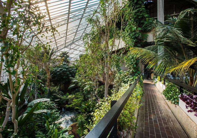 Photo of greenery in the Barbican Conservatory