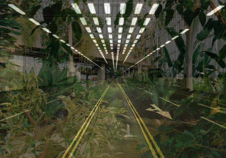 An image of the Barbican tunnel with plants inside