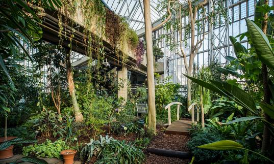 Photo of pathway with bridge surrounded by greenery and plants in the Barbican Conservatory