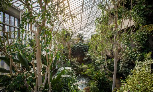 Visit The Conservatory Barbican