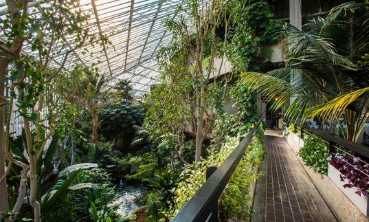 conservatory walkway with trees and plants